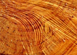como reparar madera trucos